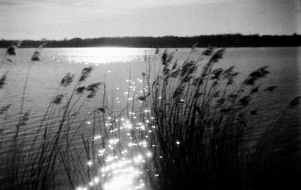 Markkleeberger See mit Schilf